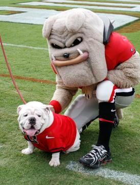 uga and hairy dawg